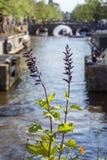 Deux plantes vertes près du canal avec un bateau pendant le jour à Amsterdam Photos libres de droits