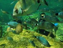 Deux plongeurs nageant avec des poissons dans les océans profonds Photo stock