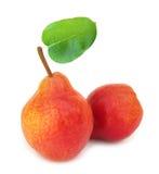 Deux poires rouges parfaites avec la lame Photos libres de droits