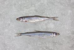 Deux poissons crus frais d'éperlan sur la vue supérieure de glace blanche Photographie stock