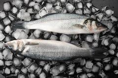 Deux poissons de bar sur la glace Poissons crus Photo libre de droits