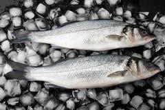 Deux poissons de bar sur la glace Poissons crus Images stock