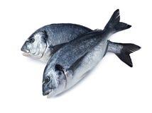 Deux poissons de dorado croisés d'isolement sur le fond blanc photographie stock