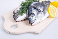 Deux poissons de Gilthead sur un panneau de découpage Photos stock