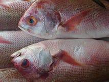 Deux poissons de la mer, mensonge sur l'un l'autre, échelles de rose, ailerons rose, ventre blanc, yeux bleus, un contact doux, u Photographie stock libre de droits