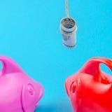 Deux poissons suivent le billet de banque du dollar sur une ficelle comme amorce Photos stock