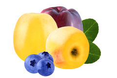 Deux pommes et myrtilles trois jaunes d'isolement sur le backgroun blanc Images stock
