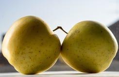 Deux pommes jaunes Photographie stock