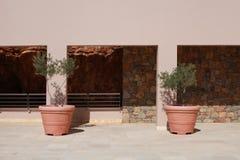 Deux pots de terre cuite avec les oliviers sur la terrasse du mediter en pierre Image stock