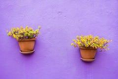 Deux pots en céramique avec des fleurs Images libres de droits
