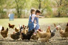 Deux poulets de alimentation de petite fille Images libres de droits
