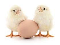 Deux poulets et oeufs image libre de droits