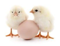 Deux poulets et oeufs images libres de droits