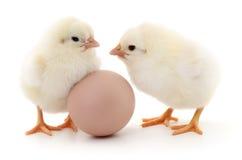 Deux poulets et oeufs photos stock