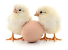 Deux poulets et oeufs photos libres de droits