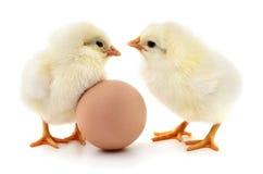 Deux poulets et oeufs photo stock
