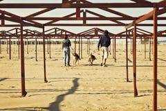 Deux propriétaires avec leurs chiens dans une plage Image libre de droits