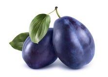 Deux prunes bleues sur le fond blanc Image libre de droits