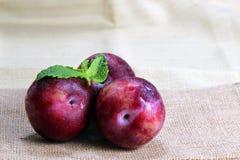 Deux prunes et menthes Photographie stock libre de droits