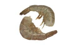 Deux rangée crue du Roi Shrimps Laying In d'isolement sur le blanc Photos libres de droits