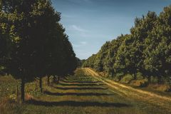 Deux rangées des arbres photos libres de droits