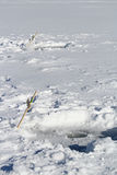 Deux raye toujours l'installation sur un lac congelé Image libre de droits