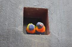 Deux renversants et perroquets ccolorful image stock