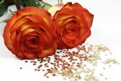 Deux roses et étoiles d'isolement Image libre de droits