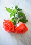 Deux roses lumineuses sur le marbre Images libres de droits