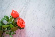 Deux roses lumineuses sur le marbre Images stock