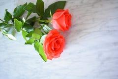 Deux roses lumineuses sur le marbre Image libre de droits