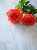 Deux roses lumineuses sur le marbre Photos stock