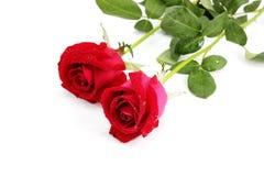 Deux roses rouges Image libre de droits