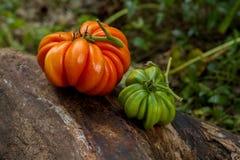 Deux séries de tomates de RAF sur un rondin Photos stock
