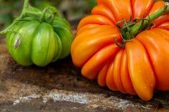 Deux séries de tomates de RAF sur un rondin Image stock