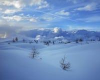 Deux sapins neigeux seuls d'hiver sur le fond de ciel bleu de flanc de montagne Image stock
