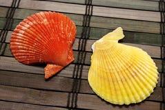 Deux seashells. image stock