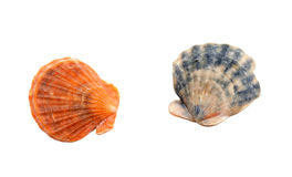 Deux seashells Photos stock