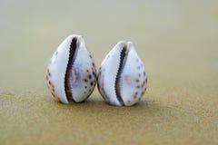 Deux seashells sur la plage Le concept de la récréation de touristes image stock