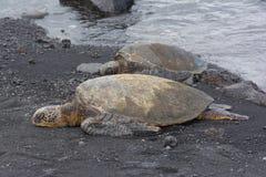 Deux seaturtles sur la plage noire de sable, Hawaï Photos stock