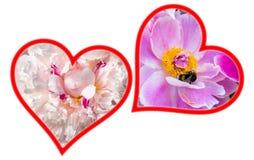 Deux silhouettes de coeurs de fleur pour le Valentine& x27 ; jour de s Photos libres de droits