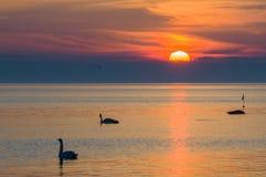 Deux silhouettes de cygnes dans le beau coucher du soleil Photo stock