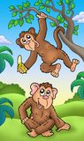 Deux singes de dessin animé Photo stock