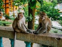 Deux singes tristes photographie stock