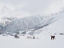 Deux skieurs dans un paysage de montagne en mauvais temps en hiver images libres de droits