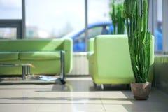 Deux sofas confortables verts dans l'intérieur Images libres de droits