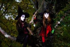 Deux sorcières s'asseyant sur l'arbre Photo stock