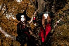 Deux sorcières s'asseyant sur l'arbre Photos stock