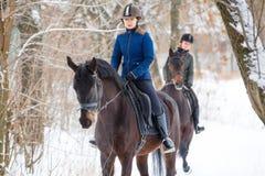 Deux sportives montant des chevaux de baie en parc d'hiver Image libre de droits