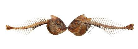 Deux squelettes de baiser de poissons images stock